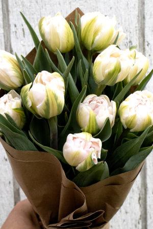 Fresh Double Tulips - Blush 6 stem