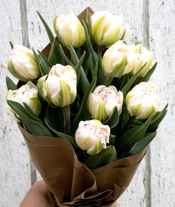 Fresh Double Tulips Blush - 12 stems