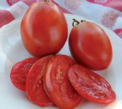 Organic Amish Paste Tomato Plant