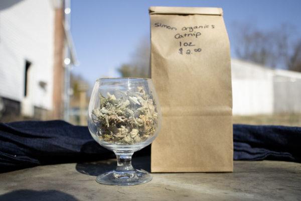 Organic Catnip Tea