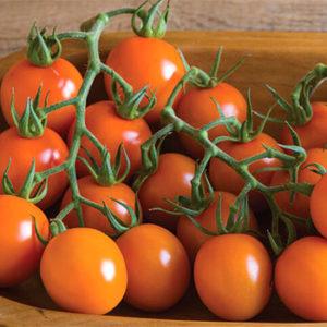 Organic Clementine Tomato Plant