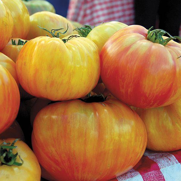 Organic Copia Tomato Plants