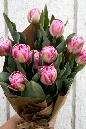 Fresh Double Tulips - Pink 6 stems