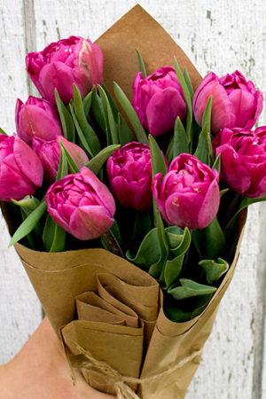 Fresh Double Tulips - Purple 6 - stem