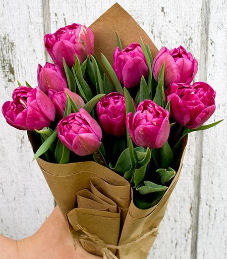 Fresh Double Tulips - Purple 12 - stem