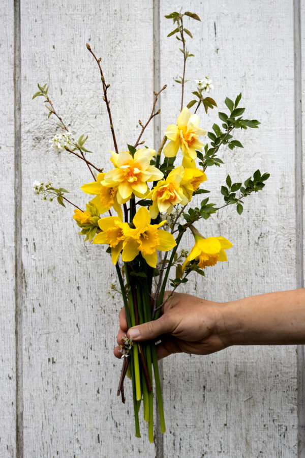 Bundles of Spring Gold Narcissus Full 15 stems