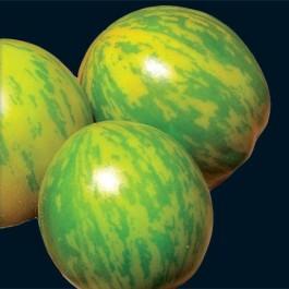Organic Green Zebra Tomato Plant
