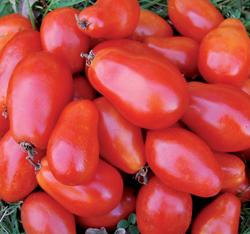 Organic Martino's Roma Tomato Plant