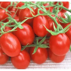 Organic Red Grape Tomato Plant