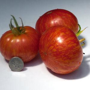 Organic Solar Flair Tomato Plant