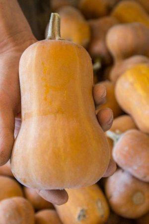 Organic Honey Nut Butternut
