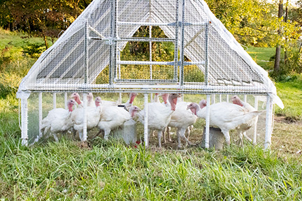 Organic Pastured Turkey
