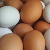 eggs-icon-home